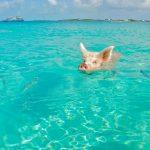 海で速く泳ぎたいならピッチを上げる