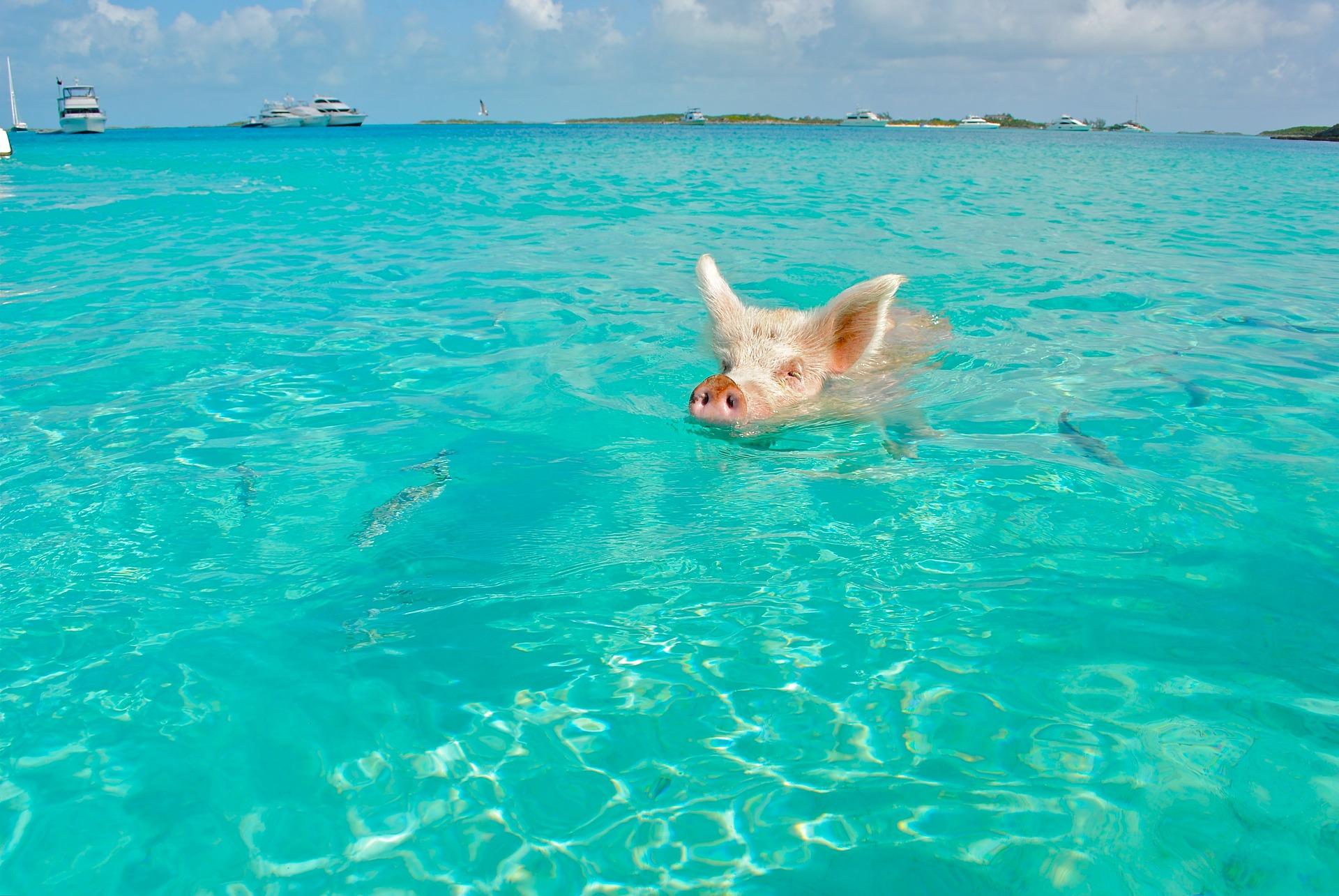 海で速く泳ぎたいならピッチを上...
